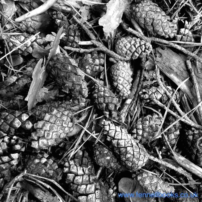 Day 26 - Pine Cones